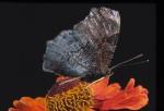 ANIM2002-Butterfly versie 1 - versie 2