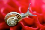 ANIM2005-SNAIL ON RED_X8P9480