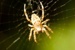 ANIM2005-SPIDER CLOSE_X8P9841 - versie 2