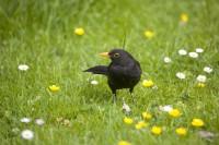BIRD2005-VADER MEREL_X8P0410