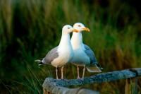 BIRD2005-ONE PAIR OF EYES_X8P0506