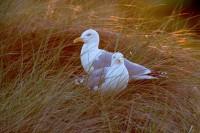 BIRD2005-PREPARING FOR THE NIGHT_X8P0528