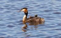 BIRD2005-CR-A MOTHER'S JOB_X8P0602