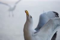 BIRD2005-THE LOOP_X8P0905