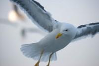 BIRD2005-EYEBALL_X8P0928