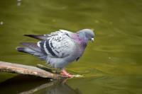 BIRD2005-BRRR-CAN I FLY LIKE A FISH_X8P0990