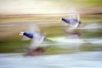 BIRD2005-ROCKETS AND BULLETS_X8P0486