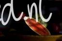 FRUI2008-RED SPOT-VX8P3791_min - versie 3
