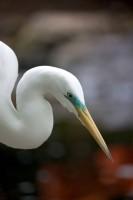 BIRD2006-REIGER-PORTRET-VX8P2133