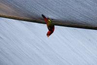 BIRD2007-BEEP-VX8P9714