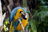 BIRD2007-ARA'S IN LOVE-VX8P9685