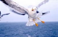 BIRD2003-Sjonny KNOCK KNOCK KNOCK