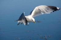 BIRD2008-MEEUW 7-VX8P3156