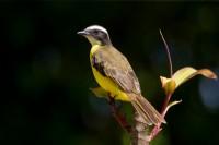 BIRD2009-GRIETJEBIE-VX8P4963