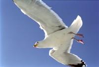 BIRD2002-Meeuw nr. 13