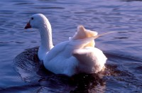 BIRD2004-Wat een mooie konnnnt
