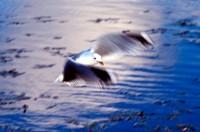 BIRD2004-Johnathan-hoover1