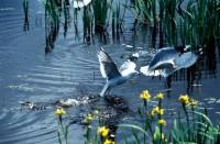 BIRD2004-ArtsUnited