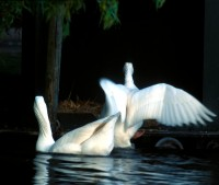 BIRD2004-Return From Heaven