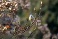 BIRD2005-BEFORE TAKE-OFF_MG_6717