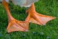 BIRD2005-HOT LEGS_MG_7084