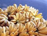 FRUI2001-Going bananas - versie 3