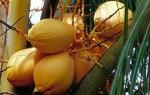 FRUI2001-Golden coconuts - versie 3