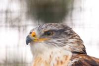 BIRD2005-MEAT EATHER_MG_7243