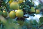 FRUI2001-Waving oranges  - versie 3