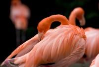 BIRD2005-BEYING PINK_MG_7382
