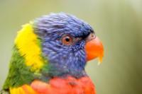 BIRD2005--COLOURFUL LORI_X8P8351