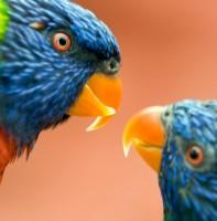 BIRD2005-LORI KISS_X8P8357