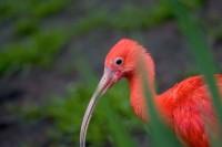 BIRD2005-PORTRET-RED PARADE (LIGGEND)_X8P9001