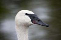 BIRD2005-PORTRET-INTEGRATED_X8P9031