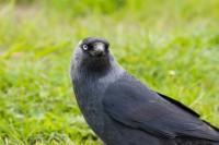 BIRD2005-MR FATHEAD-PORTRET_MG_7985