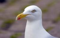 BIRD2005-SJONNY PORTRET_MG_8004