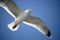 BIRD2005-WINGS_X8P9578