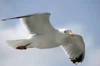 BIRD2005-EYEBALL_X8P9639