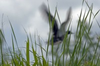 BIRD2005-TAKE OFF 2_MG_8127
