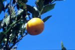 FRUI2004-Otange and blue sky  - versie 3