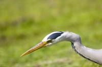 BIRD2005-ATTACK_MG_8365