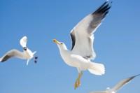 BIRD2005-AEROBATHICS_X8P0261