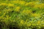 ONKR2005-FRESH WEEDS 2_X8P9283 - versie 2