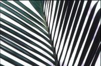 GREE2003-Zebra sky