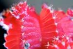 FLOW2005-Cactus_X8P7376