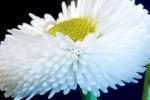 FLOW2005-White tubes_X8P7386