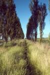 NATU2004-Onkruid-Weeds - versie 2