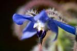 FLOW2007-VIVID BLUE-VX8P0485 - versie 3