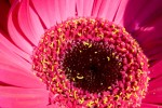 FLOW2005-GERBERAHART_X8P8662