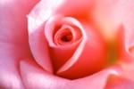 FLOW2005-RoosRose_MG_6317 - versie 2